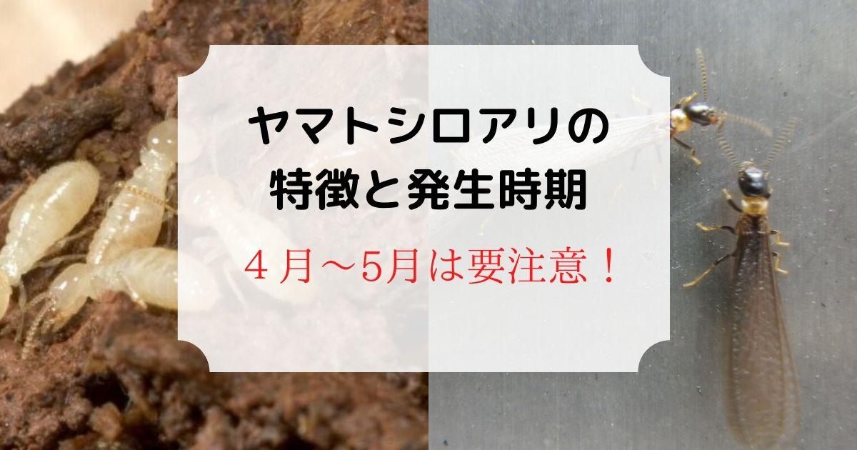 【画像】ヤマトシロアリの特徴と発生時期!4~5月は要注意!