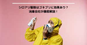 シロアリ駆除はゴキブリに効果あり? 消毒会社が徹底解説!